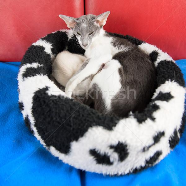 современных кошек серый Сток-фото © ivonnewierink