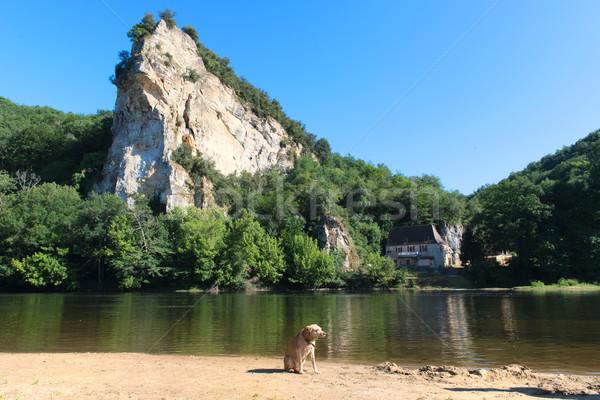Dog near the river Stock photo © ivonnewierink