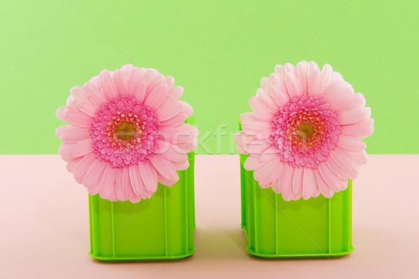 Gerber in pink and green Stock photo © ivonnewierink