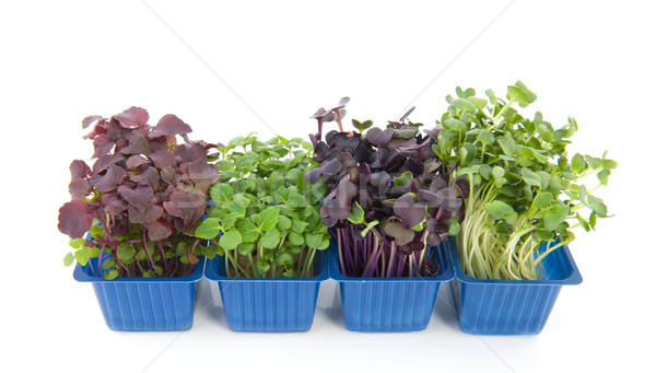 Stock photo: Fresh garden cress