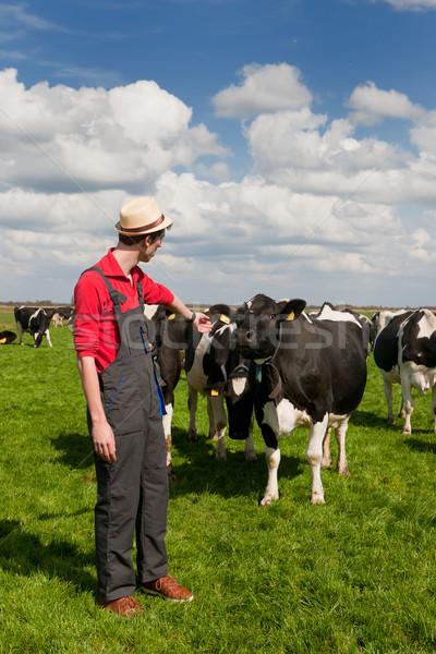 farmer in field with cows Stock photo © ivonnewierink
