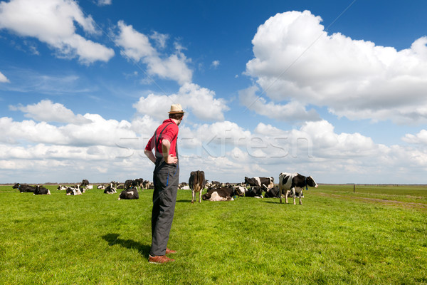 Typical Dutch landscape with farmer and cows Stock photo © ivonnewierink