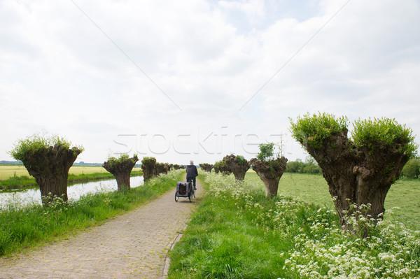 корова петрушка голландский пейзаж весны Сток-фото © ivonnewierink