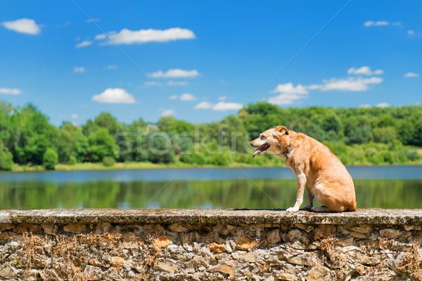 старые собака природы коричневая собака стены пейзаж Сток-фото © ivonnewierink