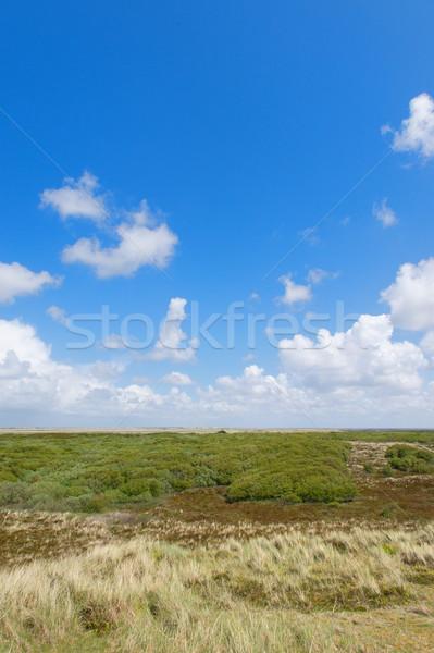 オランダ語 海岸 風景 北 海 草 ストックフォト © ivonnewierink