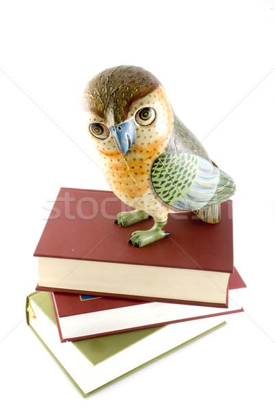 知恵 図書 教育 鳥 大学 フクロウ ストックフォト © ivonnewierink