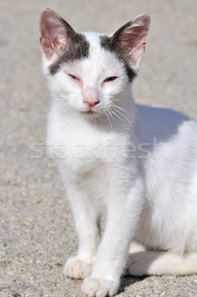 Diseased Greek cat Stock photo © ivonnewierink