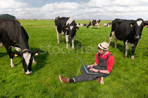 Fiatal gazda laptop mező tehenek dolgozik Stock fotó © ivonnewierink