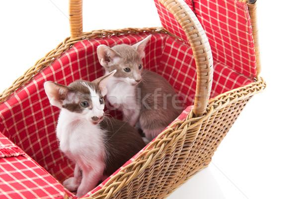 Küçük kedi gizleme piknik sepeti kırmızı Stok fotoğraf © ivonnewierink