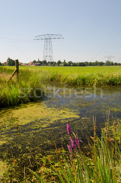 Dutch landscape in Friesland Stock photo © ivonnewierink
