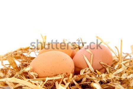 鳥の巣 卵 春 孤立した 白 イースター ストックフォト © ivonnewierink