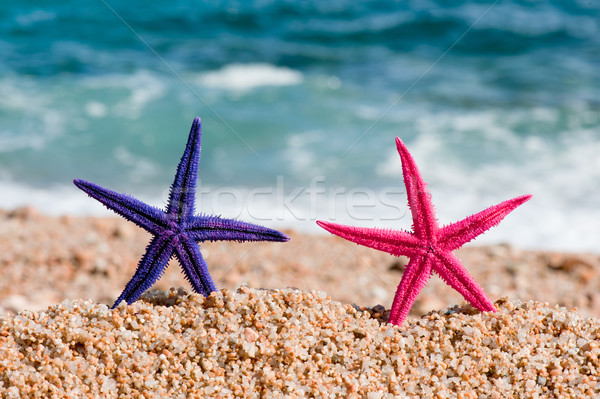 Colorful starfishes Stock photo © ivonnewierink