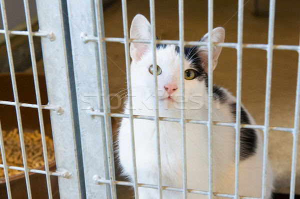Stock photo: Cat in animal shelter