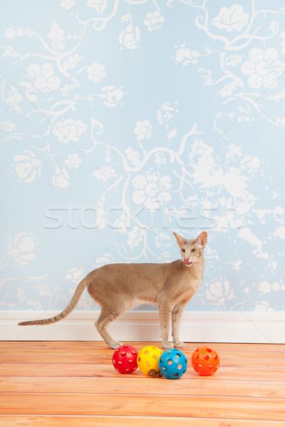 сиамские кошки Vintage стены бумаги зеленые глаза комнату Сток-фото © ivonnewierink