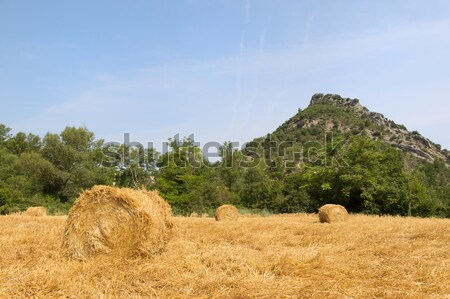 Blocs foin champs carré agriculture paysage Photo stock © ivonnewierink