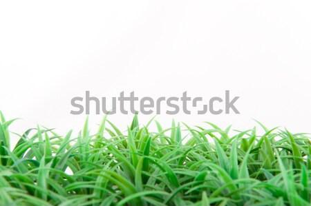 Herbe artificielle herbe verte isolé blanche fond Photo stock © ivonnewierink
