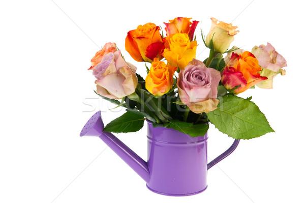 カラフル 花束 バラ じょうろ 孤立した 白 ストックフォト © ivonnewierink
