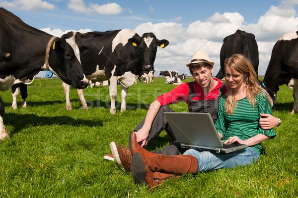 Stok fotoğraf: çiftçiler · alan · inekler · çiftlik · dizüstü · bilgisayar