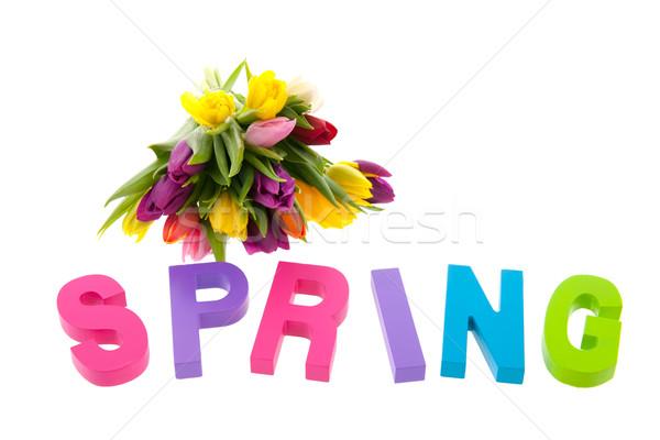 Colorido primavera tulipanes texto aislado blanco Foto stock © ivonnewierink