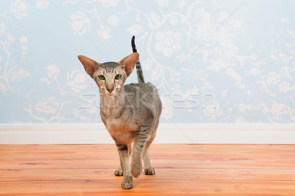 Siamese cat vintage ściany papieru zielone oczy pokój Zdjęcia stock © ivonnewierink