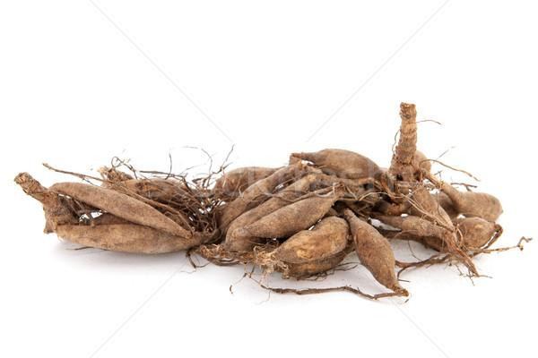 Dahlia tubers Stock photo © ivonnewierink
