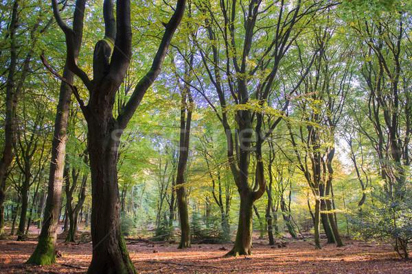 Wald Blatt Bäume Landschaft viele Laub Stock foto © ivonnewierink