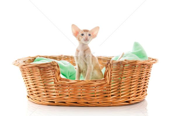 мало котенка красный кошки сидят большой Сток-фото © ivonnewierink