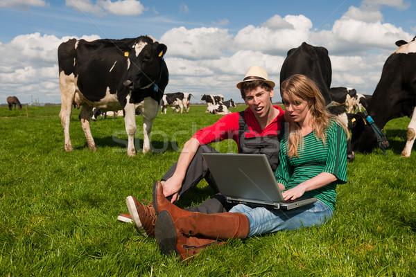 Сток-фото: Фермеры · области · коров · фермы · ноутбука