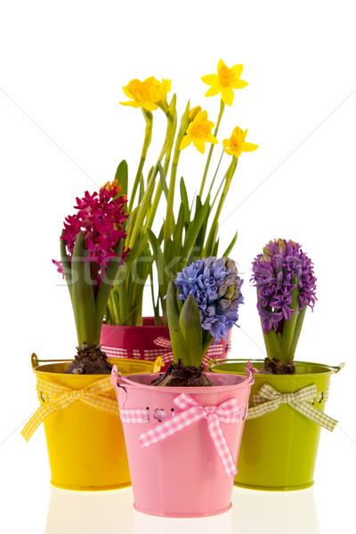 Foto stock: Colorido · narcisos · isolado · branco · flores · verde