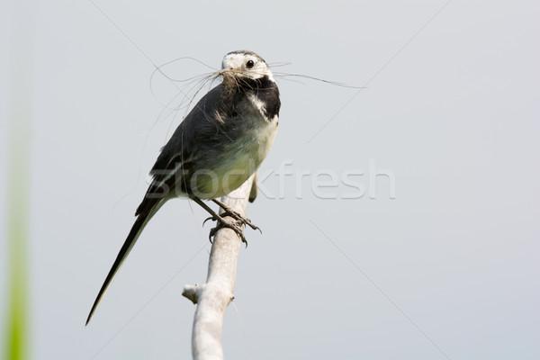 Foto stock: Branco · ninho · edifício · pássaro · ramo · holandês