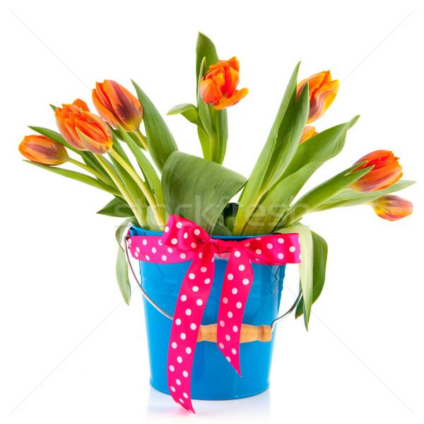 Photo stock: Bleu · seau · orange · tulipes · arc