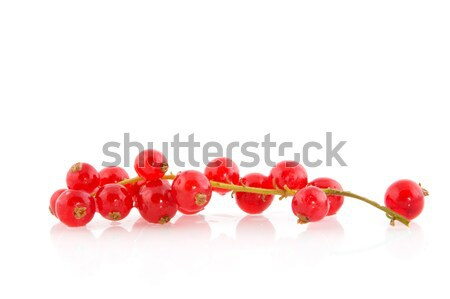 redcurrants Stock photo © ivonnewierink