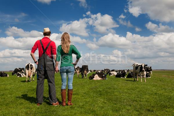 Foto d'archivio: Tipico · panorama · agricoltore · Coppia · vacche