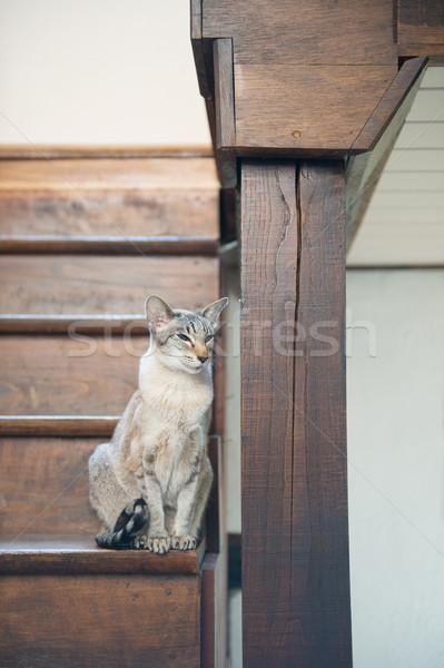 Sziámi macska fából készült lépcsőház ül belső Stock fotó © ivonnewierink