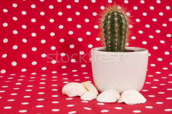 cactus on red Stock photo © ivonnewierink