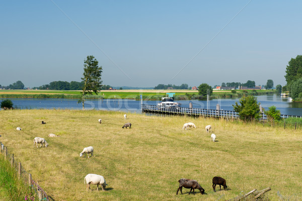 Dutch landscape with water boats and sheep Stock photo © ivonnewierink