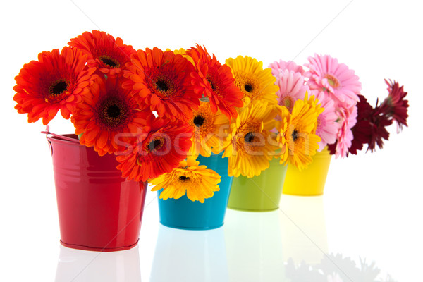 Colorful row with Gerber flowers Stock photo © ivonnewierink