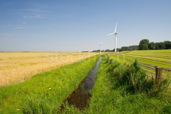 風力タービン 農業 風景 オランダ 草 トウモロコシ ストックフォト © ivonnewierink