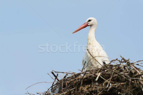 Fehér gólya fészek kék ég természet Stock fotó © ivonnewierink