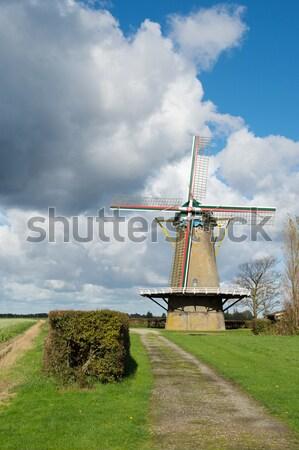 Nederlands windmolen typisch landschap gras gebouw Stockfoto © ivonnewierink