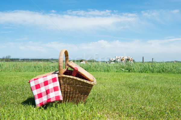 Picnic basket in the country Stock photo © ivonnewierink
