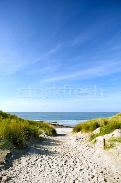 Plaj kumu yol plaj çim deniz kum Stok fotoğraf © ivonnewierink