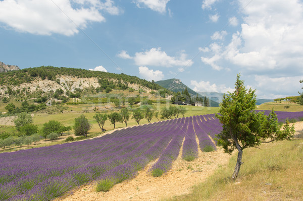 Landscape in the French Drome Stock photo © ivonnewierink