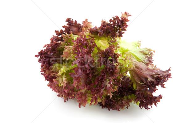 Lollo Rosso salad Stock photo © ivonnewierink