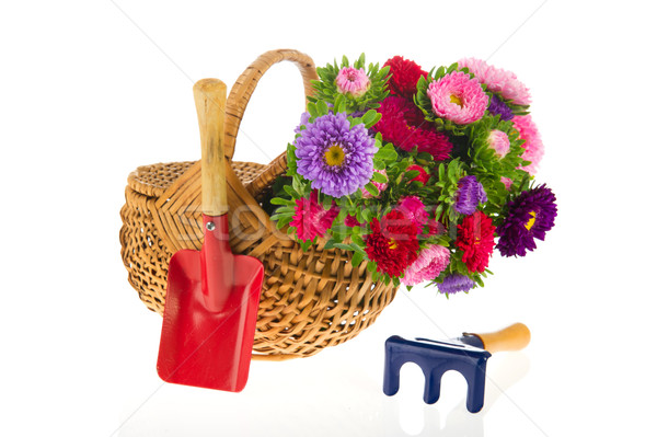 Bouquet New England Asters Stock photo © ivonnewierink