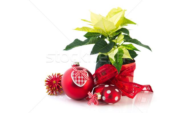 Red Poinsettia Stock photo © ivonnewierink