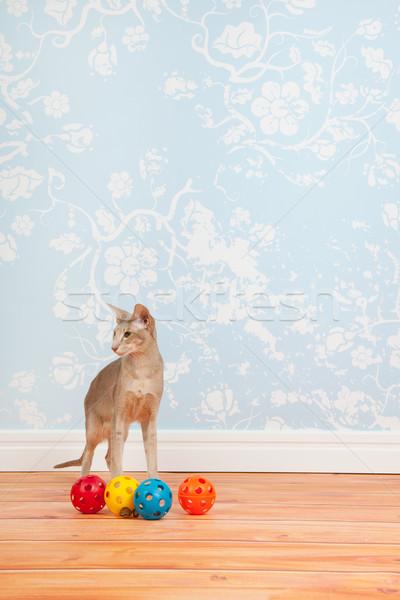 Sziámi macska klasszikus fal papír zöld szemek szoba Stock fotó © ivonnewierink