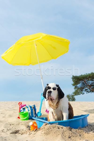 Resfriamento para baixo cão praia engraçado água Foto stock © ivonnewierink