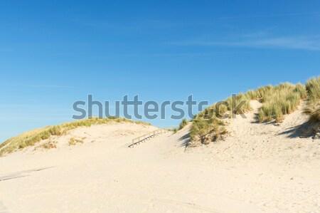 побережье пути забор природы песок Sunshine Сток-фото © ivonnewierink