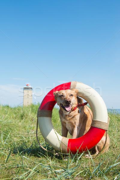 Resgatar cão costa holandês paisagem segurança Foto stock © ivonnewierink